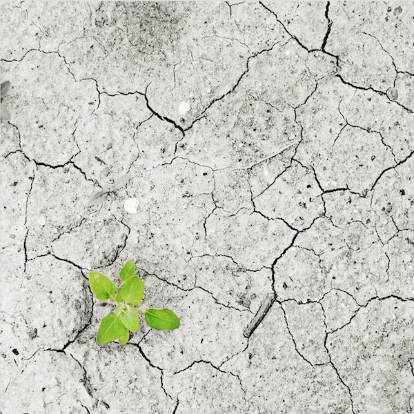 CenterFolders/Paris_FR/Bouddhisme_engag/climate-change.jpg