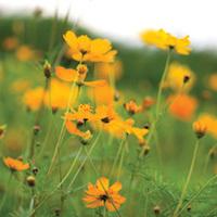 CenterFolders/WDC/Nature/flowers.jpg