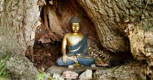 DCL/size1200x628/Buddha-in-tree.jpg