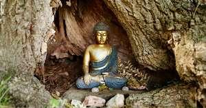 DCL/size1200x628/Buddha-in-tree.jpg