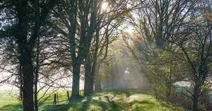DCL/size1200x628/Path_Trees_Sunlight_contemplating_death_1200x628.JPG