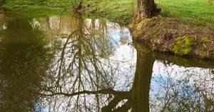 DCL/size1200x628/Pond_Tree_Sky_Reflection_1200x628.jpg