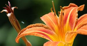 DCL/size1200x628/flower4_orange_1200x630.JPG