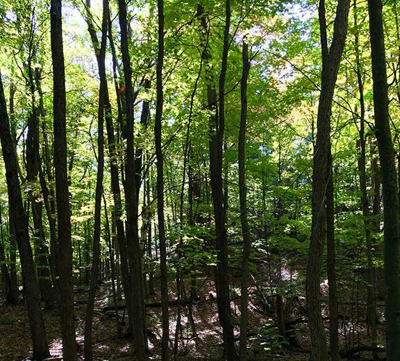 Halifax/Indias-woods.png