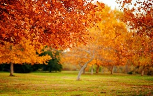 Halifax/Norbu/Nature___Seasons___Autumn_the_autumn_garden_in_orange_046220_.jpeg