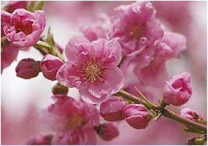 Ikebana/blossom.jpg