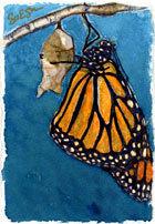 Nature/Butterfly_emerging.jpg