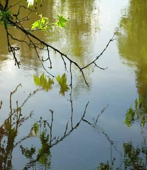Nature/leaves_in__water.jpg