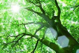 Seasonal_pictures/Sun_through_trees.jpg