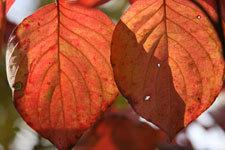 Seasonal_pictures/autumn2.jpg
