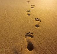 voetstappen-zand.png