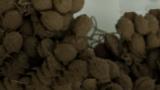 Rübenhaufen 50g; 3D-Druck