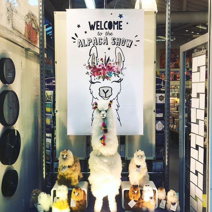 * Welcome to the Alpaca Show *  -- -- -- -- -- --..