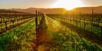Are you interested in planning a trip to California's wine country?