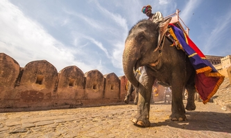 A visit to India-The land of wilderness travel