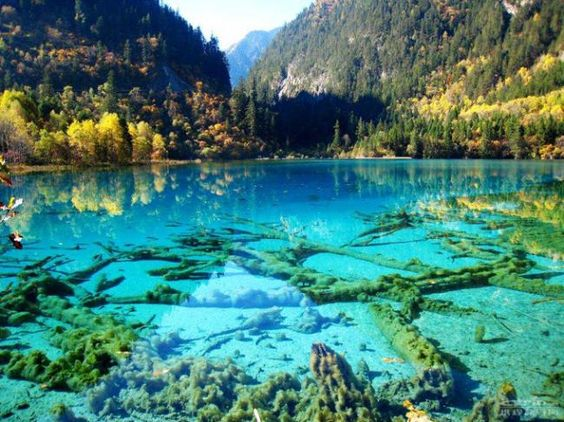Crystalline Turquoise Lake in Jiuzhaigou National Park, China. *Valley of Nine Villages* by crenk