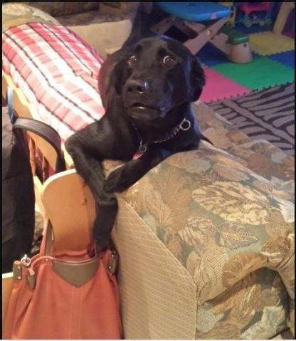 Caught Him Trying to Get into My Mums Purse by crenk