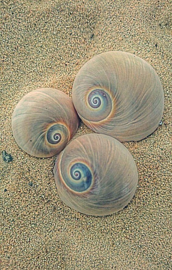 Amazing Swirl Shells on the Beach by crenk