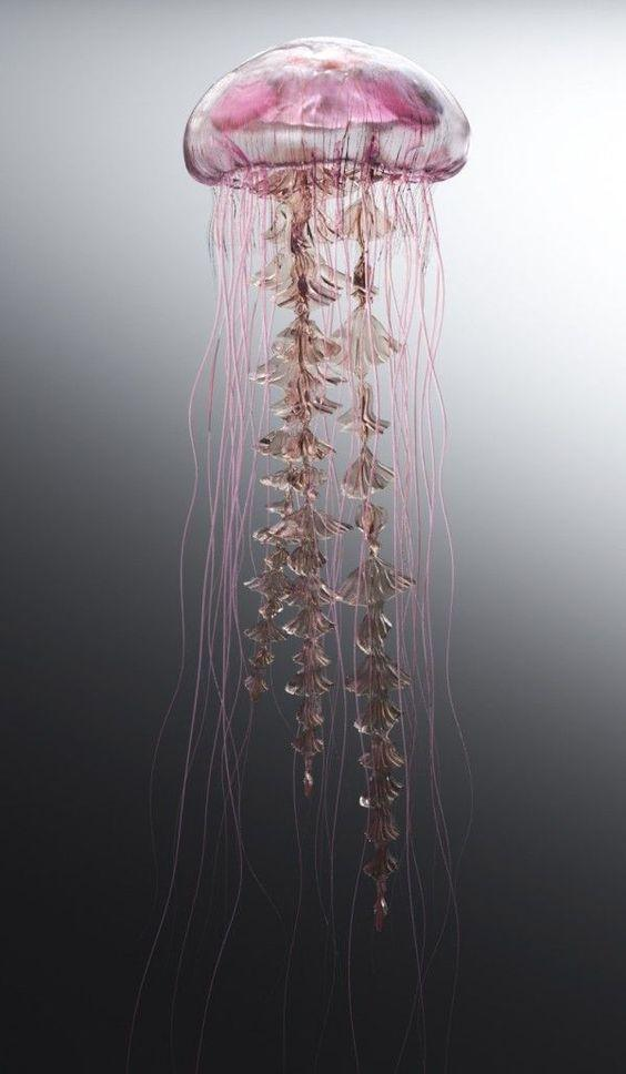 Amazing photo of a jellyfish by crenk