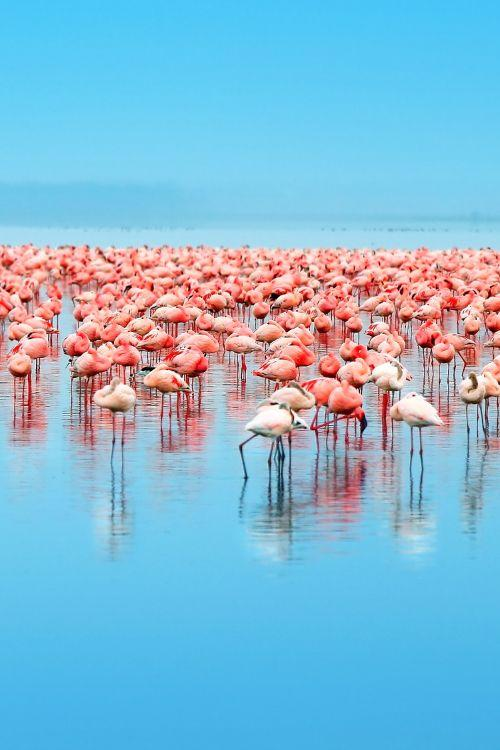 Lake Nakuru National Park is well worth a visit. It's best known for birding, and especially its flamboyant flamingos by crenk