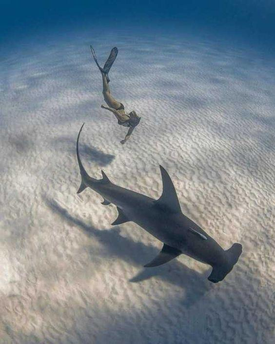 Swimmer diving down to touch a Hammerhead shark by crenk