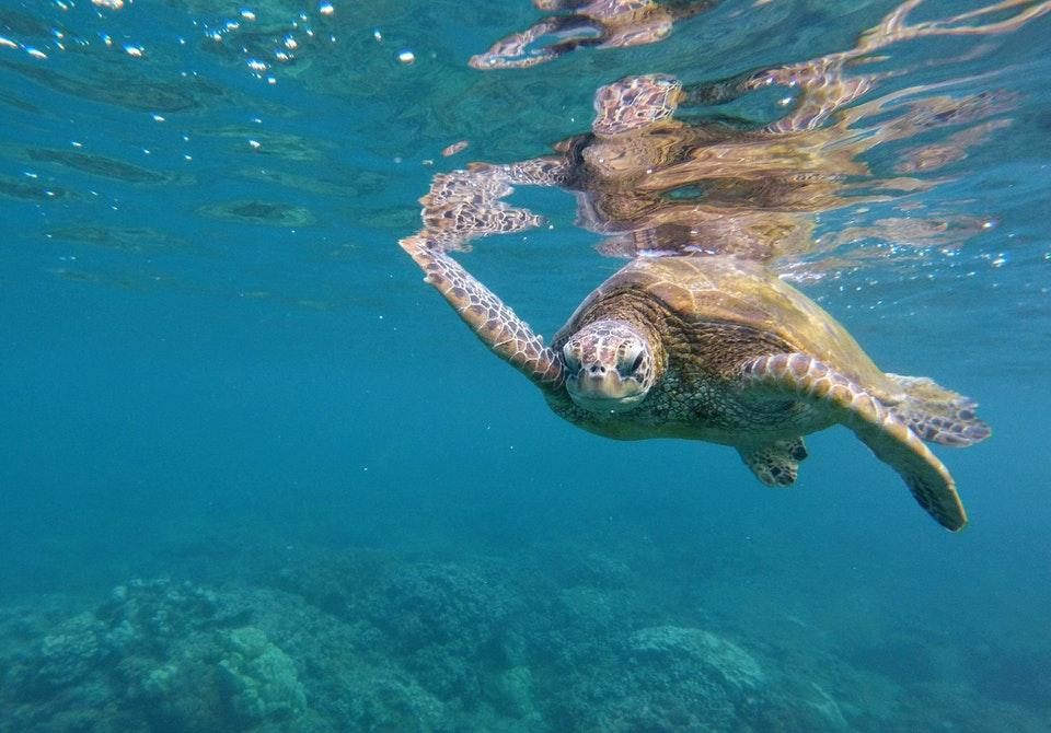 Turtle is Swimming Towards Me by crenk