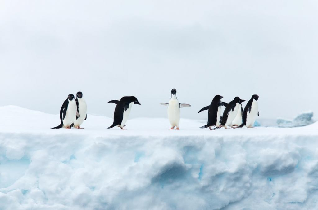 Penguins having fun on the Ice - Happy Feet by crenk