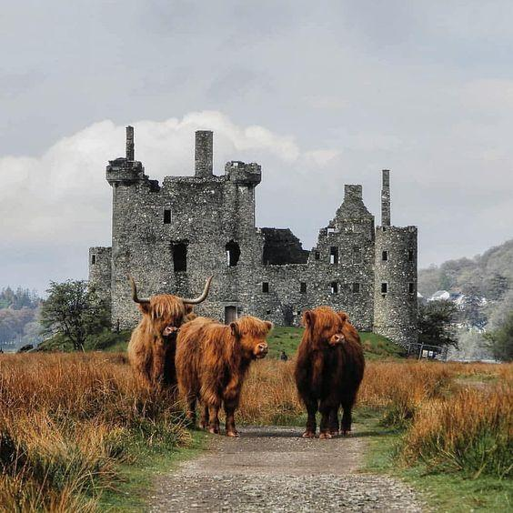 Kilchurn Castle, Scotland - with Cows in the front by crenk