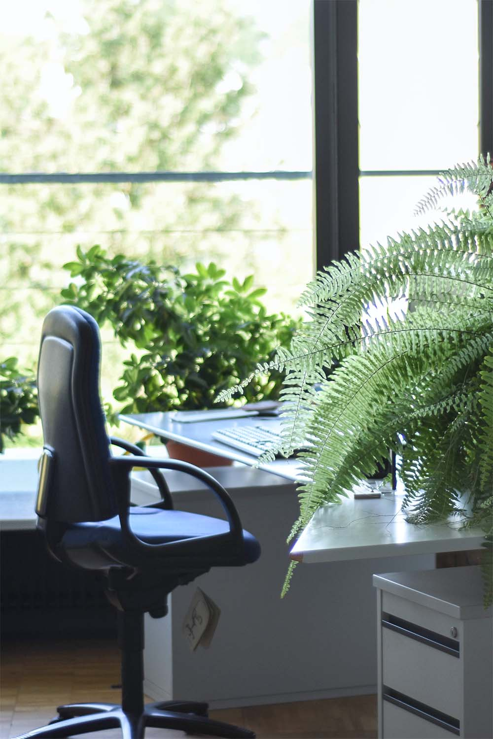 Photograph of a desk and chair by a window. There are lots of plants around the desk.