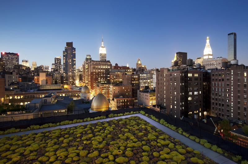 Green roof with NYC skyline in the background