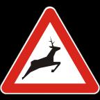1119-1 - Divje živali na cesti