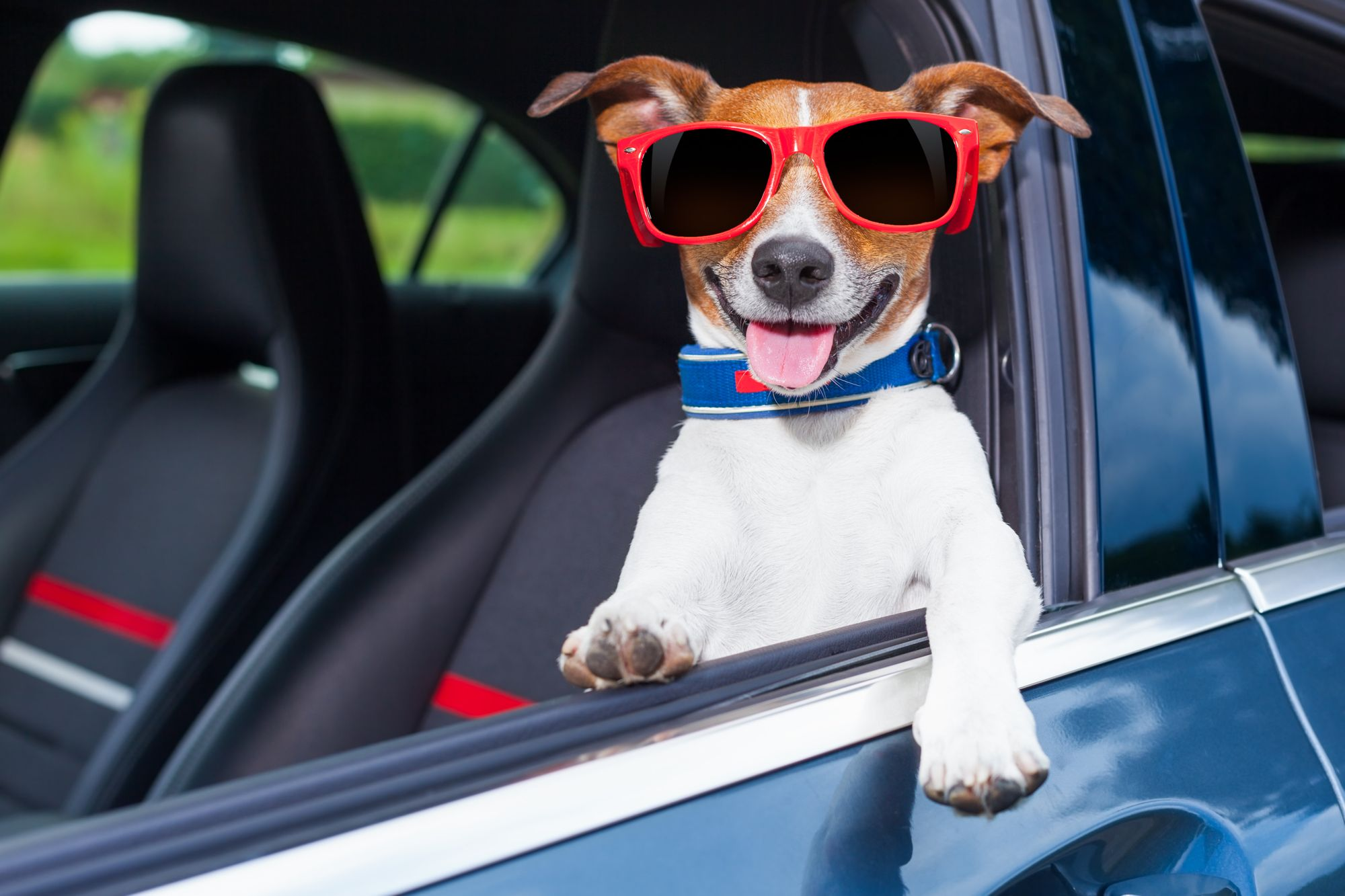 Recomendaciones para la seguridad de tu mascota al viajar en coche