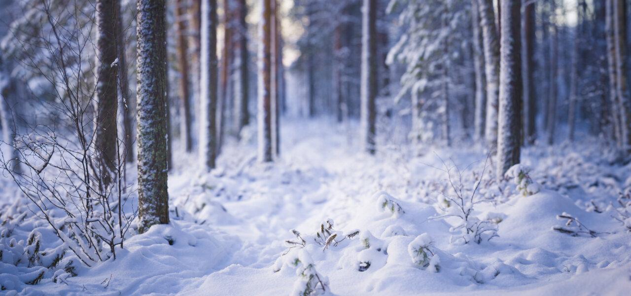 Luonto talvella