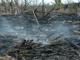Denuncian desaprensivos quema 4 mil 844 toneladas de caña en Barahona