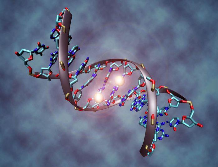 Hallan anticuerpos humanos que pueden combatir raro virus de origen africano