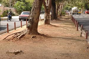 ADN aclara no ha cortado árboles en la avenida Sarasota