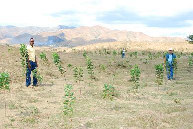 Quisqueya Verde planta más de 90 mil árboles en poblaciones haitianas y dominicanas