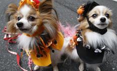 Insólito!!!: inauguran bar para perros y con cerveza especial canina en Bruselas