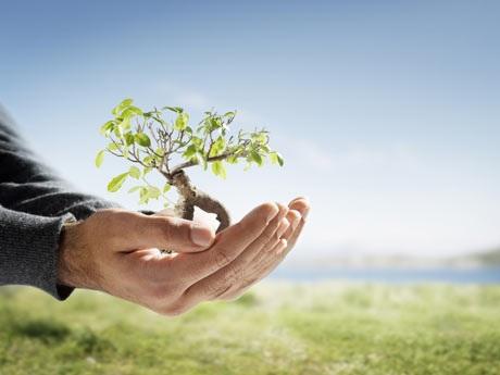 Medio Ambiente Sembrará dos millones de árboles en octubre