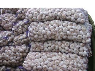 Incautan más de cinco mil libras de ajo introducidas de contrabando en la frontera
