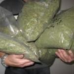 DNCD desmantela plantación de marihuana en Puerto Plata