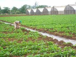 Abreu Collado advierte uso de tierras agrícolas en construcciones de viviendas