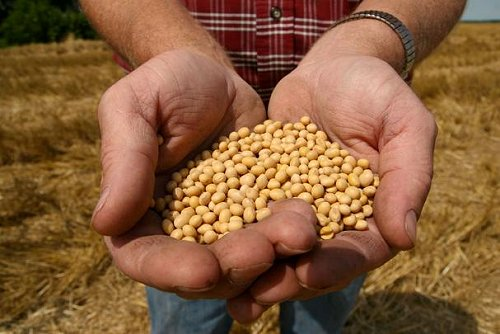 La FAO y la UE invertirán en agricultura