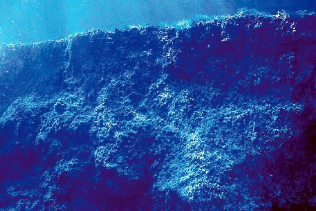 El calentamiento del Mediterráneo extinguirá el 90% de Posidonias en 40 años