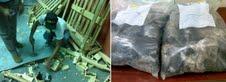 Ocupan carga de cocaína enviarían a España camuflada en mangos por AILA