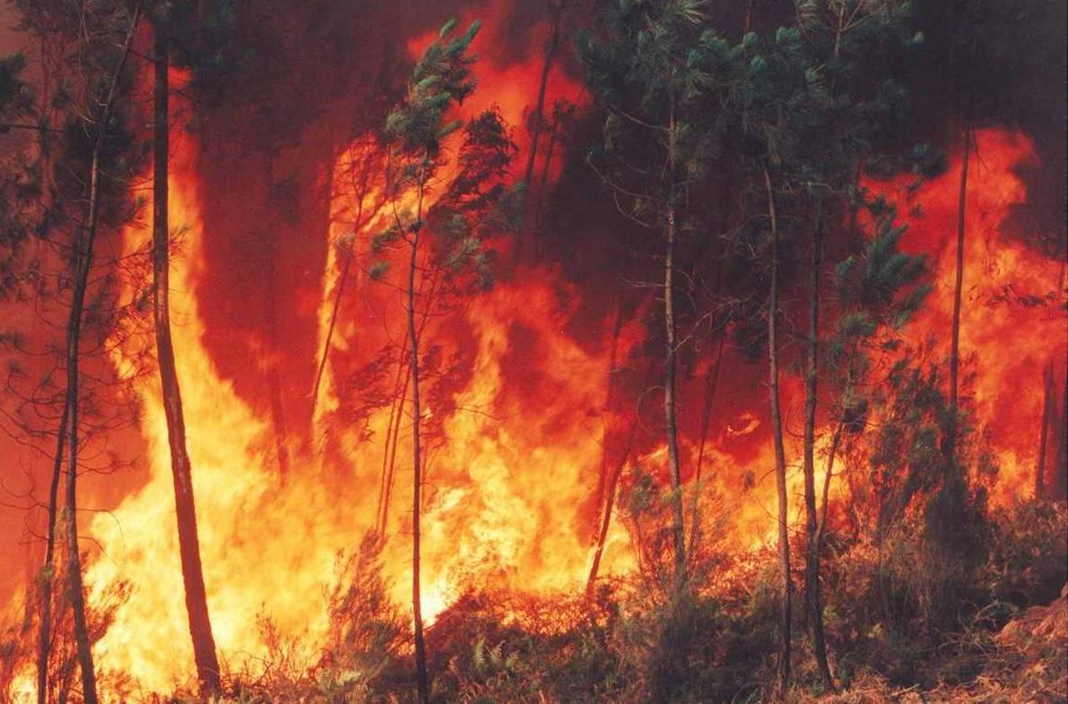 Incendios forestales afectan a cuatro estados del oeste de Estados Unidos