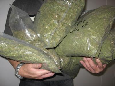 PN ocupa más de dos mil gramos de marihuana en diferentes puntos del país