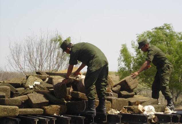 Destruyen 1,7 toneladas de marihuana en plantación en Paraguay