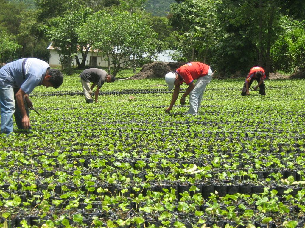 Ministro de Agricultura garantiza aumento salarial para agrónomos