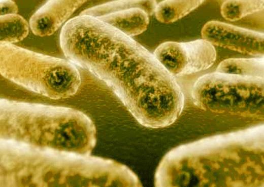 Resistencia de la gonorrea a los antibióticos se convierte en grave amenaza